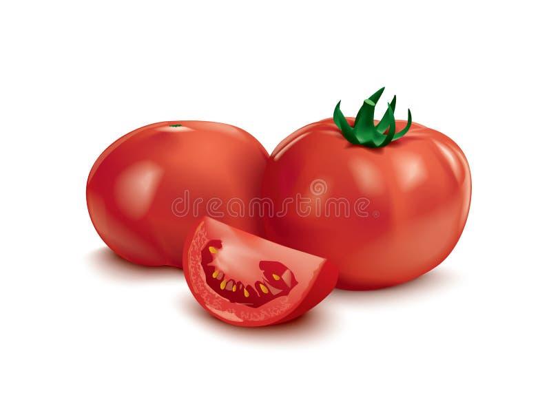 Verse en rijpe tomaten vector illustratie