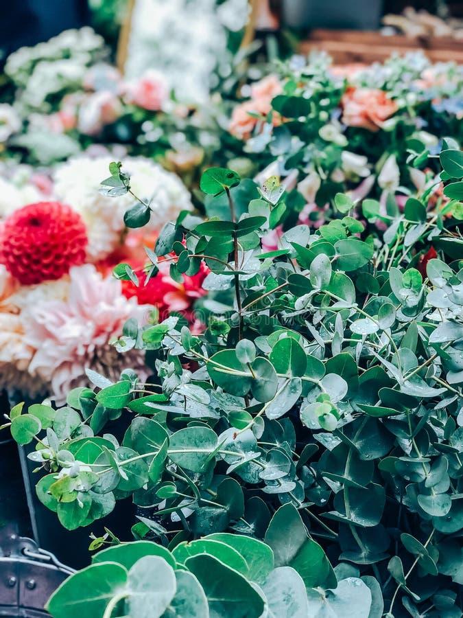 Verse eucalyptustakken in de kleine bloemenwinkel stock afbeelding