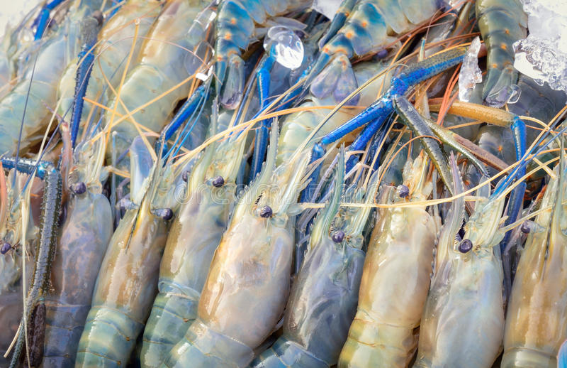 Verse garnalen op ijs in zeevruchtenmarkt stock foto's