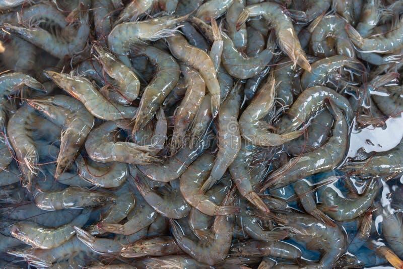 Verse garnalen van verse markt in Thailand stock foto's