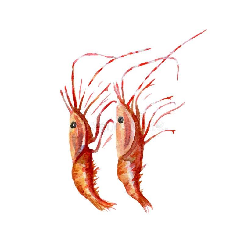 Verse garnalenillustratie Hand getrokken waterverf op witte achtergrond vector illustratie