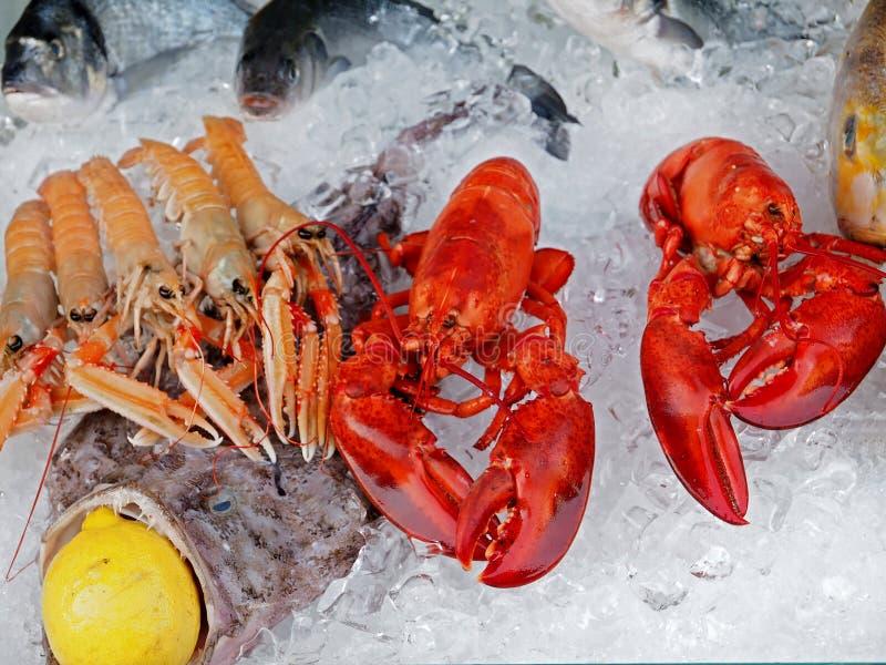 Verse gastronomische zeevruchten met zeekreeften en garnalen royalty-vrije stock foto's
