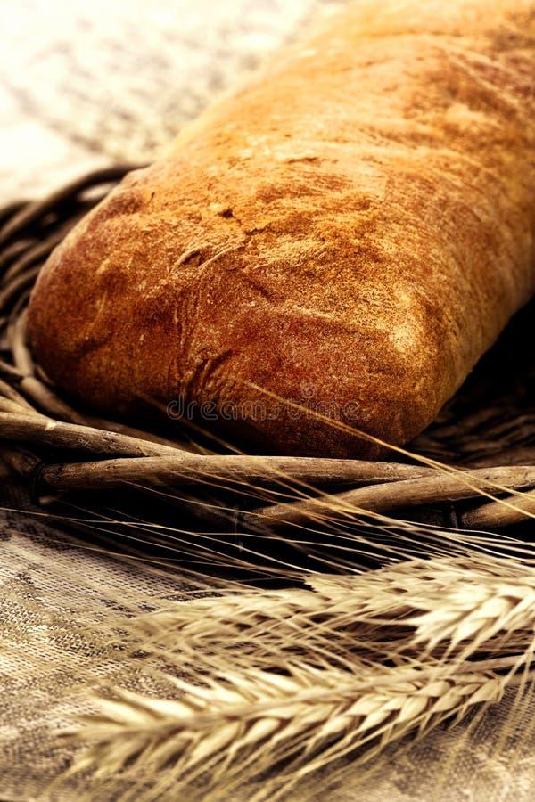 Verse gebakken broodciabatta met tarwe royalty-vrije stock foto's