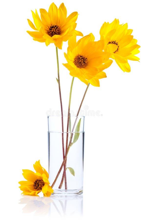 Verse gele bloemen in Geïsoleerde glaswater royalty-vrije stock foto's