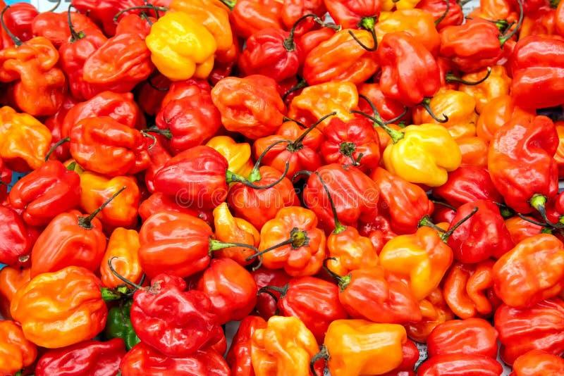 Verse gele, oranje en rode minigroene paprika's stock afbeelding