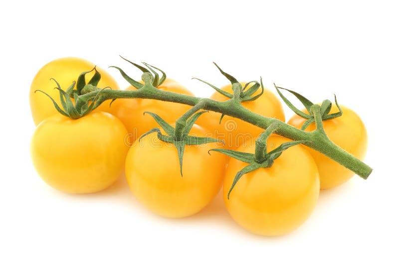 Verse gele smakelijke tom ` van ` tomaten op de wijnstok stock afbeelding