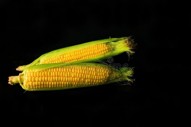 Verse gele zoete die maïskolven op zwarte achtergrond worden geïsoleerd voor voedselconcept stock afbeelding