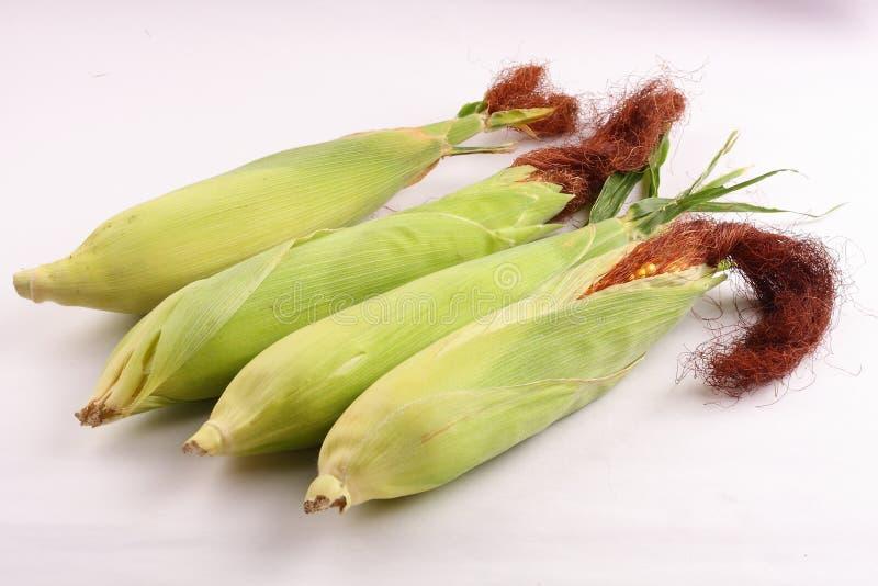 Verse geoogste suikermaïs op maïskolven royalty-vrije stock afbeeldingen