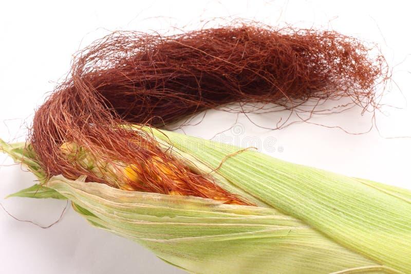 Verse geoogste suikermaïs op maïskolven royalty-vrije stock afbeelding