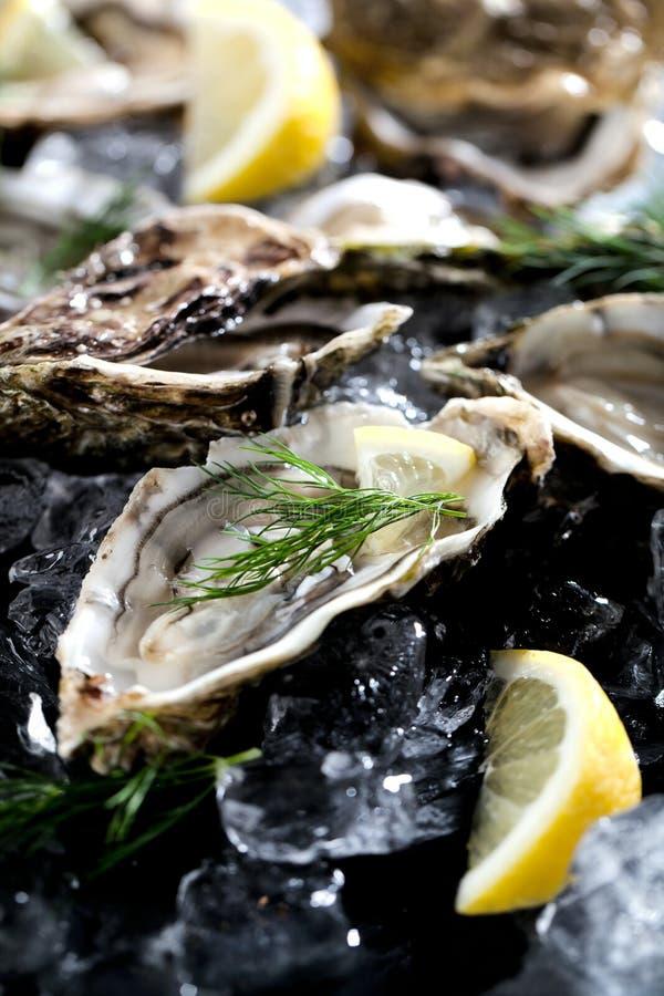 Verse geopende oester met gesneden die citroen als hoogste mening over cru wordt aangeboden royalty-vrije stock afbeeldingen