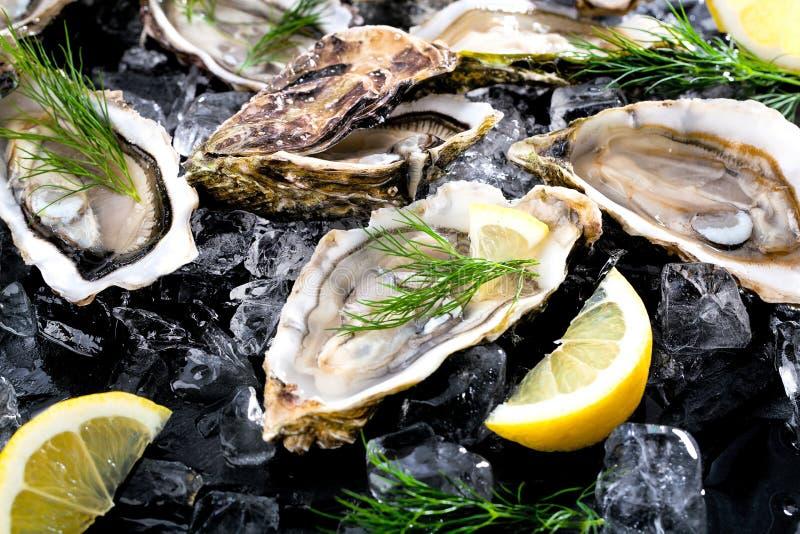 Verse geopende oester met gesneden die citroen als hoogste mening over cru wordt aangeboden stock foto