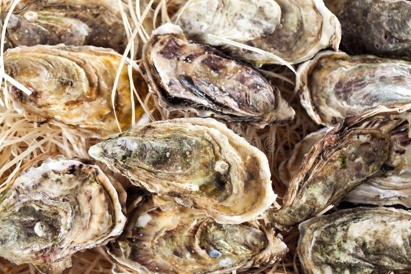 Verse geopende oester met gesneden die citroen als hoogste mening over cru wordt aangeboden royalty-vrije stock foto