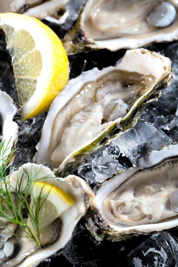 Verse geopende oester met gesneden die citroen als hoogste mening over cru wordt aangeboden royalty-vrije stock foto's