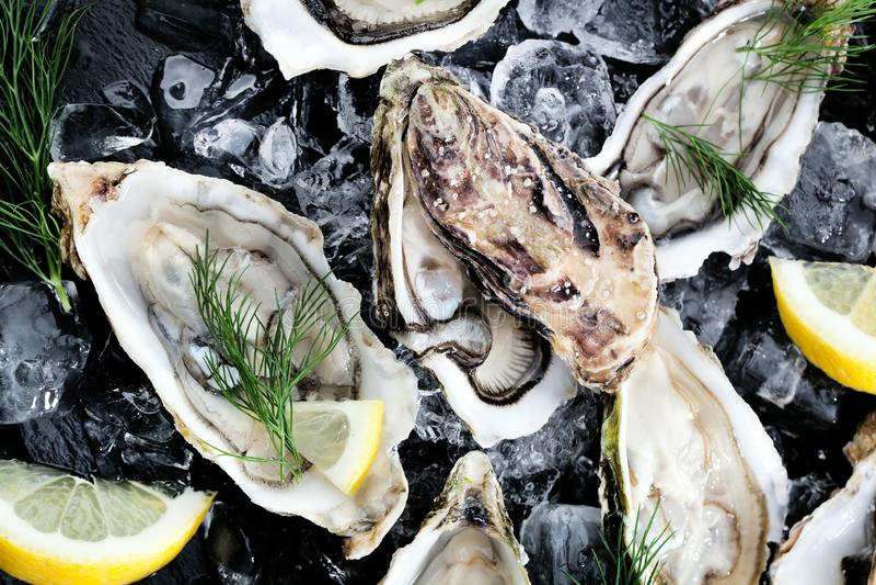 Verse geopende oester met gesneden die citroen als hoogste mening over verpletterd ijs met exemplaarruimte wordt aangeboden stock foto