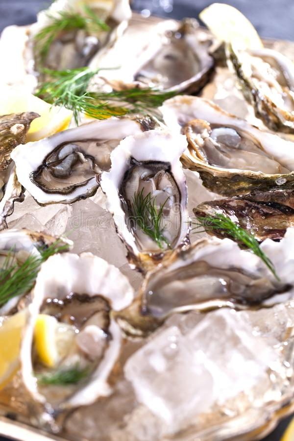 Verse geopende oester met gesneden die citroen als hoogste mening over verpletterd ijs met exemplaarruimte wordt aangeboden royalty-vrije stock foto's