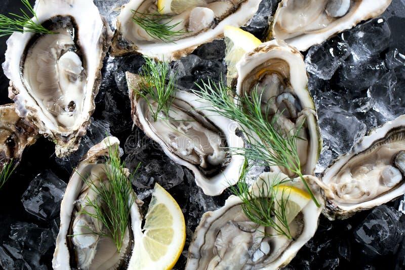 Verse geopende oester met gesneden die citroen als hoogste mening over verpletterd ijs met exemplaarruimte wordt aangeboden stock fotografie