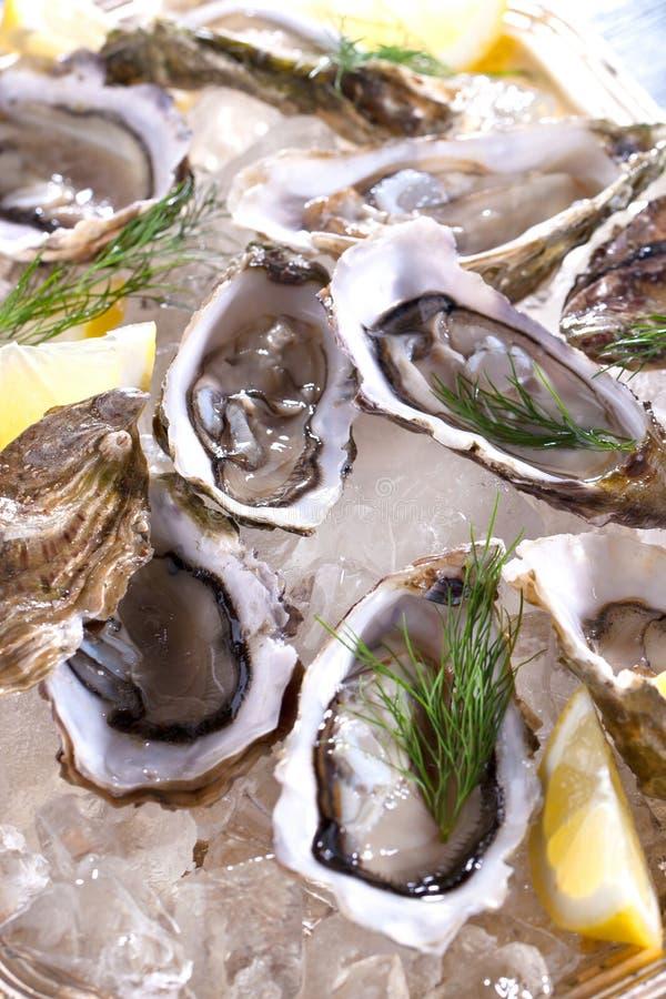 Verse geopende oester met gesneden die citroen als hoogste mening over verpletterd ijs met exemplaarruimte wordt aangeboden stock foto's