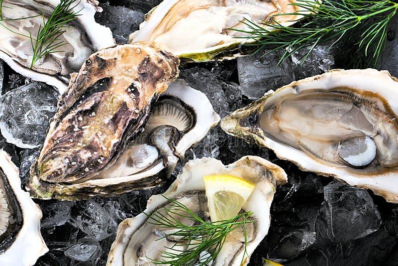 Verse geopende oester met gesneden die citroen als hoogste mening over verpletterd ijs met exemplaarruimte wordt aangeboden royalty-vrije stock foto
