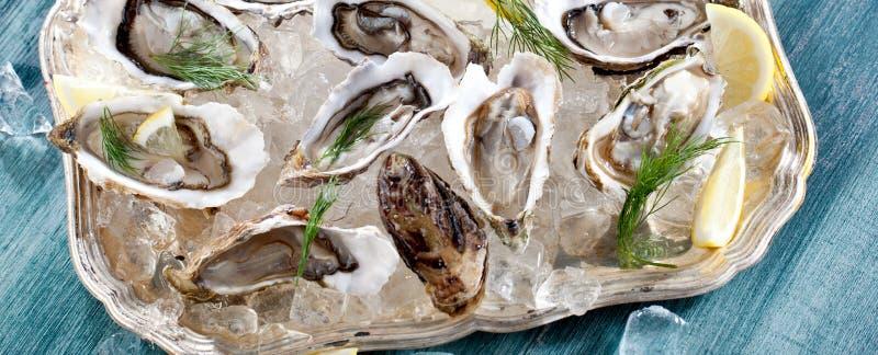 Verse geopende oester met gesneden die citroen als hoogste mening over verpletterd ijs met exemplaarruimte wordt aangeboden royalty-vrije stock afbeeldingen