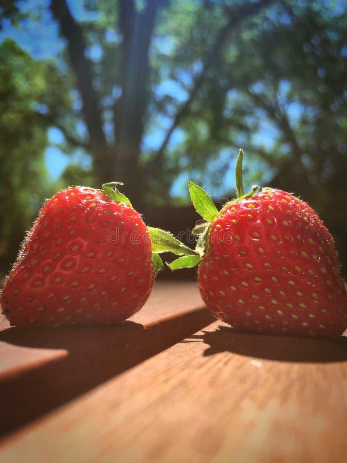 Verse Geplukte Rijpe Succulente Aardbeien stock afbeelding