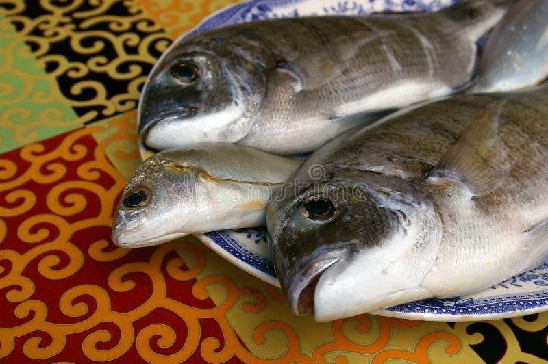 Verse gouden vissen stock afbeeldingen