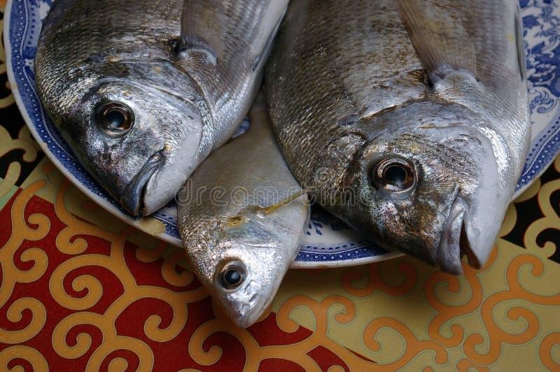 Verse gouden vissen stock foto