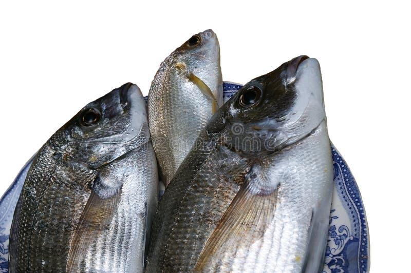 Verse gouden vissen royalty-vrije stock afbeeldingen