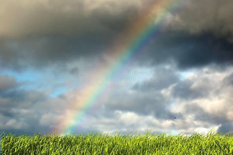 Verse gras en hemel met regenboog stock fotografie
