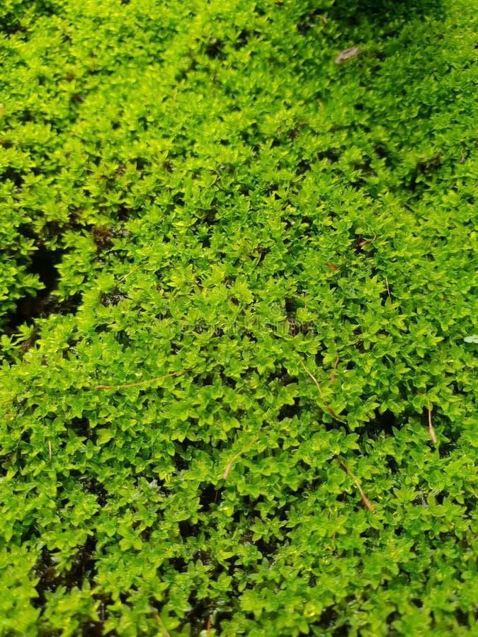 Verse groene achtergrond stock fotografie