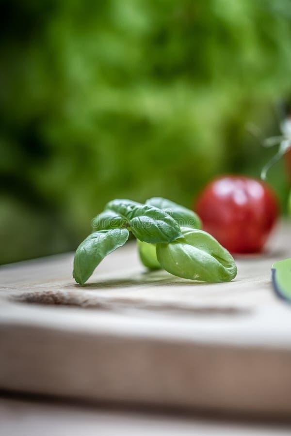 Verse groene basilicumkruid en tomaat stock afbeelding