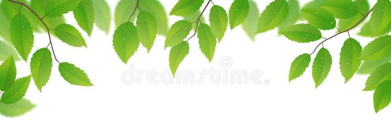 Verse groene bladeren royalty-vrije illustratie