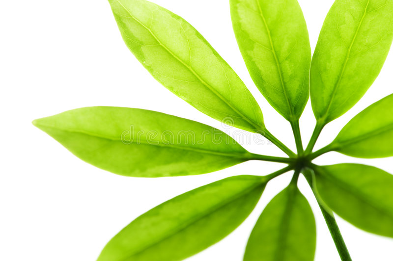 Verse groene bladeren stock fotografie