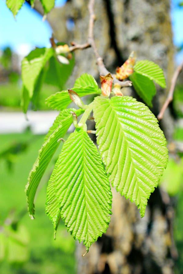 Verse groene bladeren in bos Dichte omhooggaand royalty-vrije stock foto