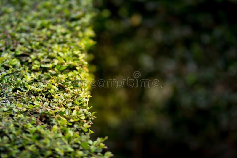 Verse groene bladeren Groene achtergrond met bladeren stock afbeelding
