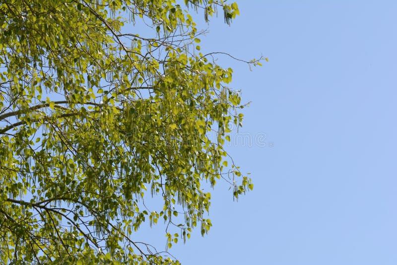 Verse groene bladeren op tak royalty-vrije stock foto's