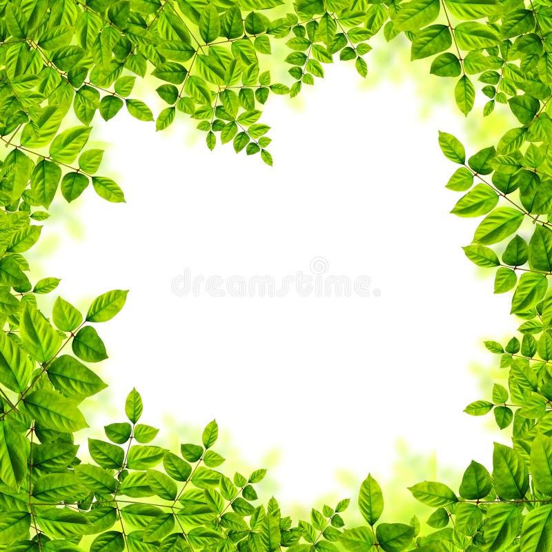 Download Verse Groene Bladerenachtergrond Stock Illustratie - Illustratie bestaande uit kleurrijk, gazon: 39100051