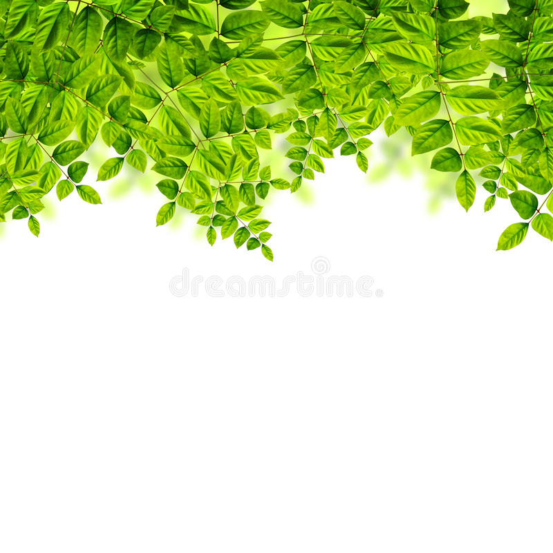 Download Verse Groene Bladerenachtergrond Stock Illustratie - Illustratie bestaande uit fotosynthese, zuiverheid: 39100231