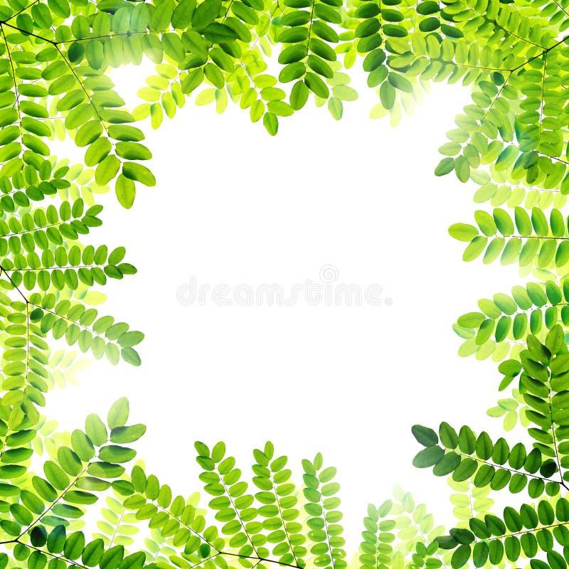 Download Verse Groene Bladerenachtergrond Stock Illustratie - Illustratie bestaande uit vers, licht: 39100313