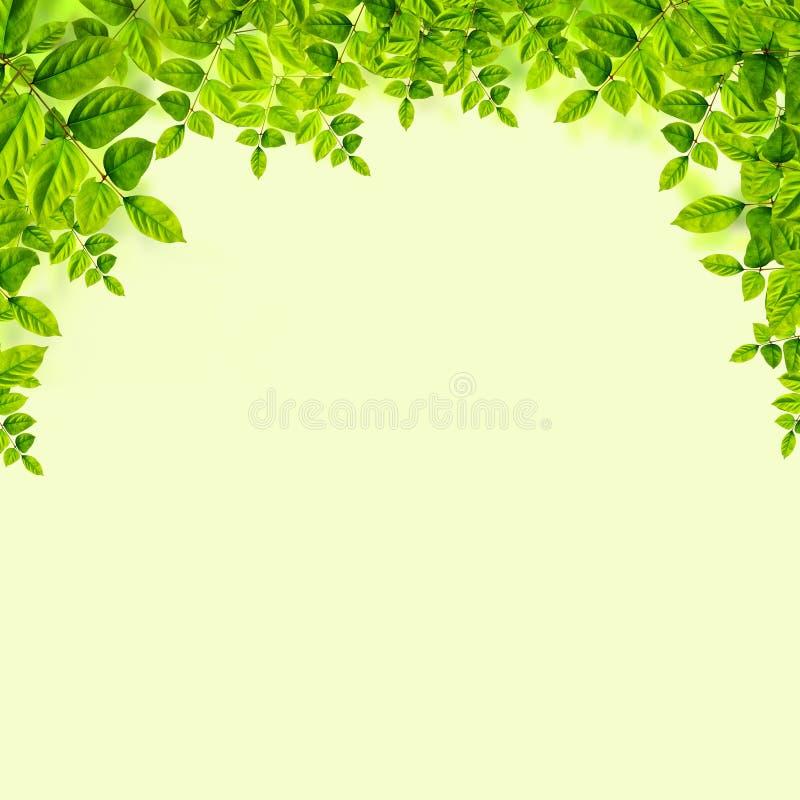 Download Verse Groene Bladerenachtergrond Stock Illustratie - Illustratie bestaande uit fotosynthese, gazon: 39100444