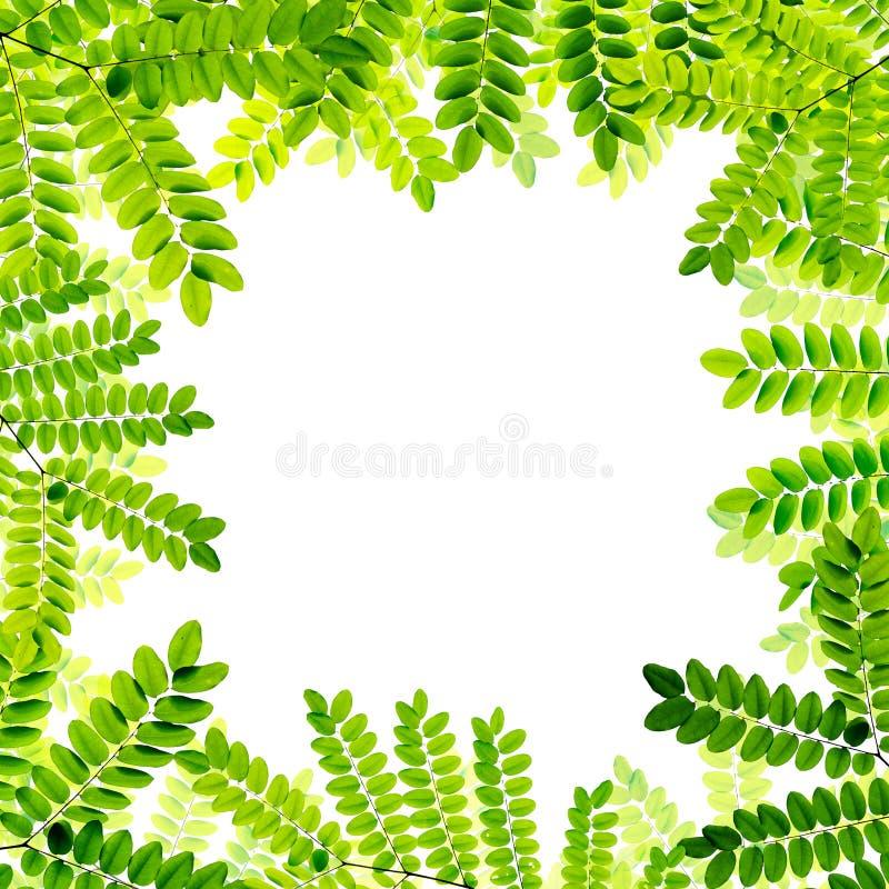 Download Verse Groene Bladerenachtergrond Stock Illustratie - Illustratie bestaande uit tuin, naughty: 39100843