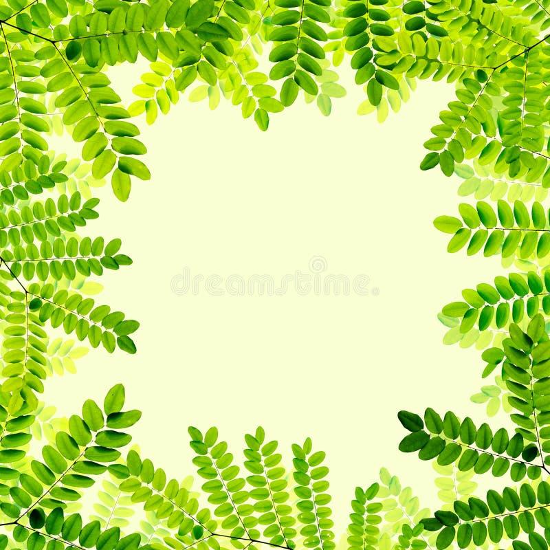 Download Verse Groene Bladerenachtergrond Stock Illustratie - Illustratie bestaande uit macro, ecologie: 39100889