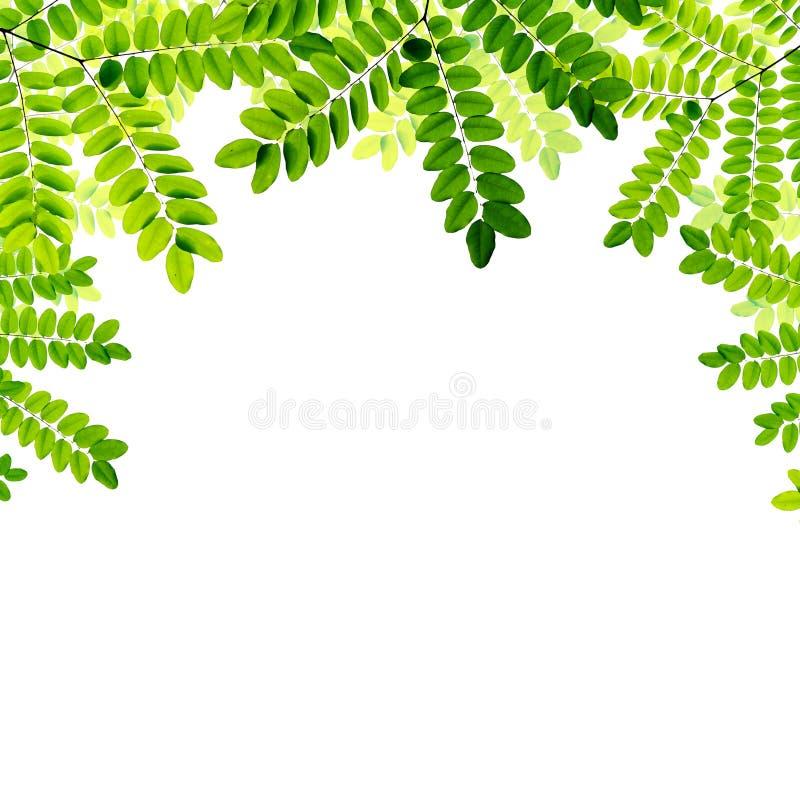 Download Verse Groene Bladerenachtergrond Stock Illustratie - Illustratie bestaande uit vers, weide: 39100929