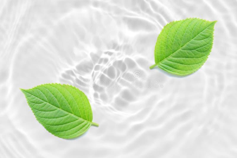 Verse groene bladsamenvatting op de gegolfte achtergrond van de stroomversnellingtextuur royalty-vrije stock afbeelding