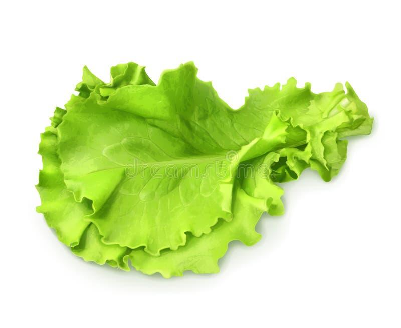 Verse groene bladsla stock illustratie