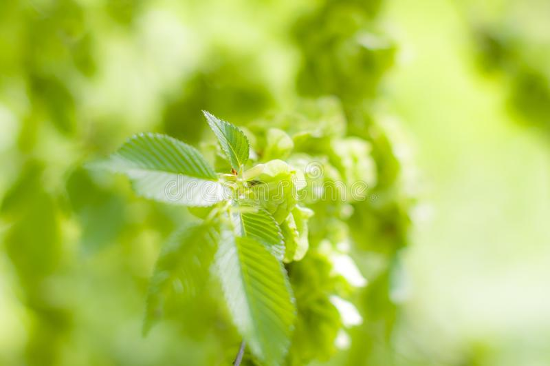 Verse groene bokeh in het park stock fotografie