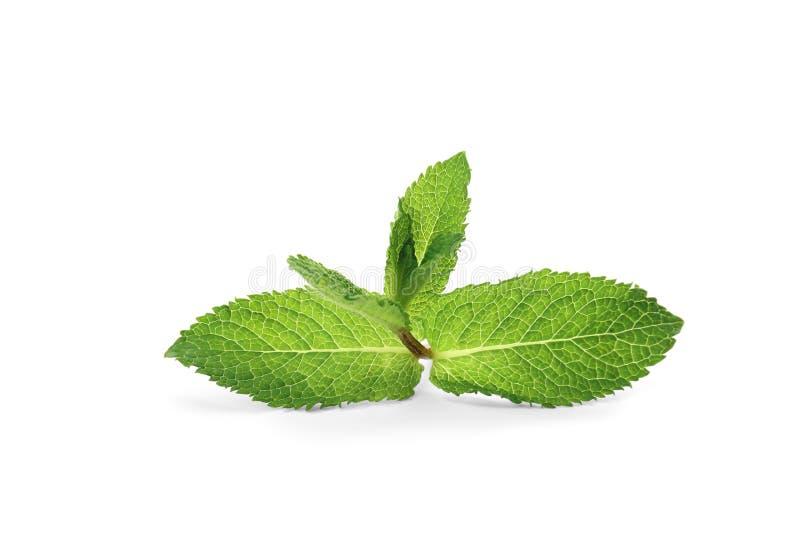 Verse groene die muntbladeren, op wit worden geïsoleerd stock afbeeldingen