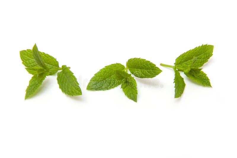 Verse groene die muntbladeren op wit worden geïsoleerd stock fotografie