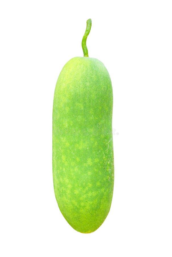 Verse groene die organische de wintermeloen of benincasahispida op witte achtergrond met het knippen van weg wordt geïsoleerd royalty-vrije stock foto's