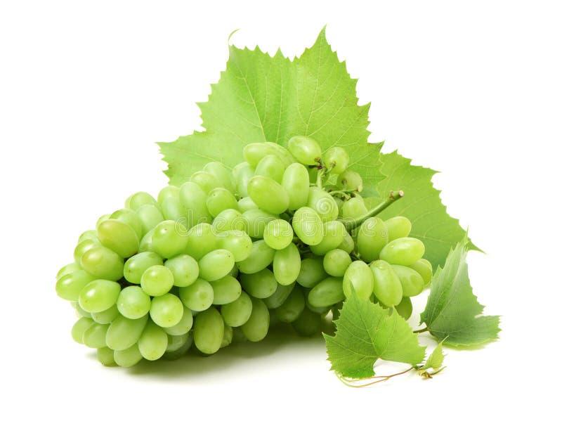 Verse groene druiven met bladeren Druif op wit wordt geïsoleerd dat stock foto's