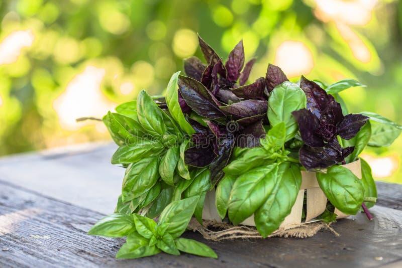 verse groene en rode de bladerenmengeling van het basilicumkruid op tuinachtergrond Zoet Genovese-basilicum en Purper Donker Opal stock fotografie